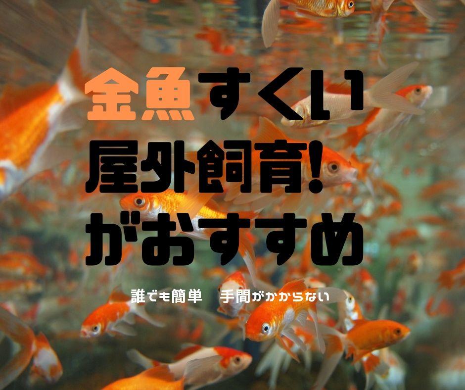 【 金魚すくい 】簡単 屋外飼育がおすすめ ビオトープ風